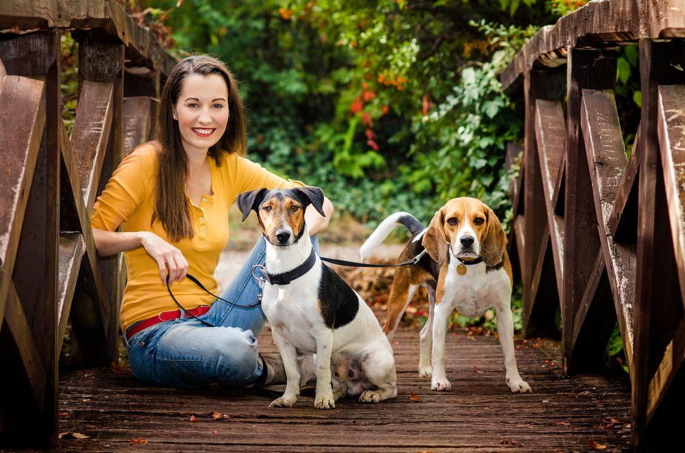 Beagle Wesen