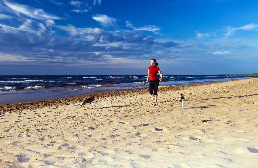 Urlaub mit Beagle