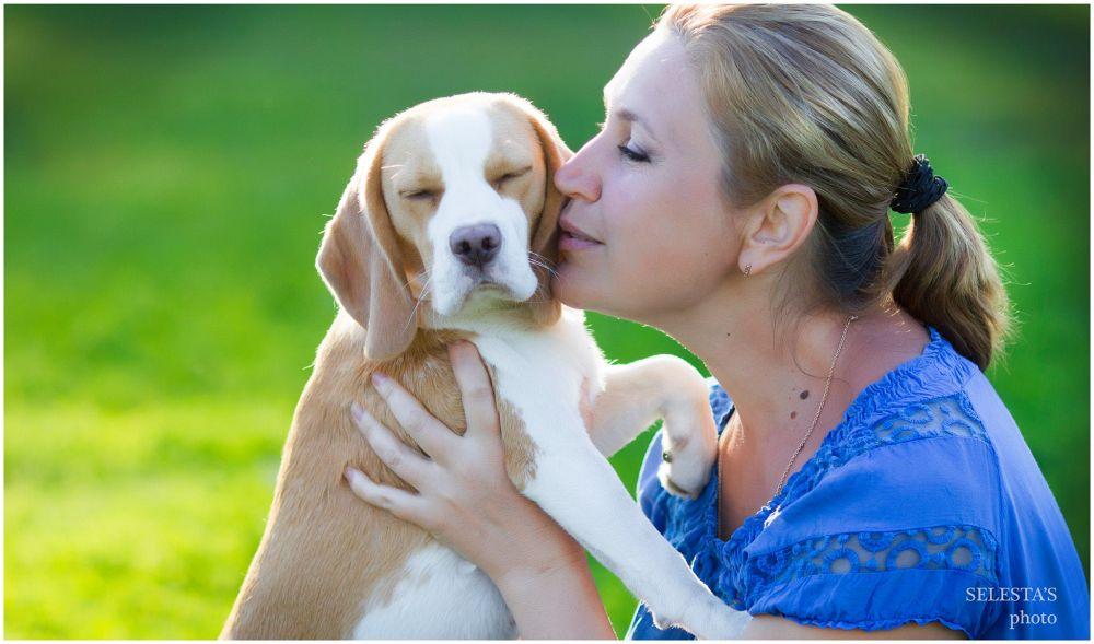 Beagle Liebe