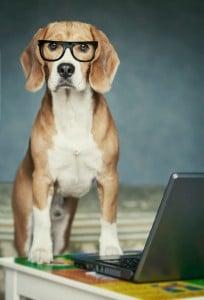 Sie können uns hier eine Nachricht schreiben, wenn Sie ein Frage zur Webseite haben. - Beaglefragen werden Ihnen im Forum beantwortet!