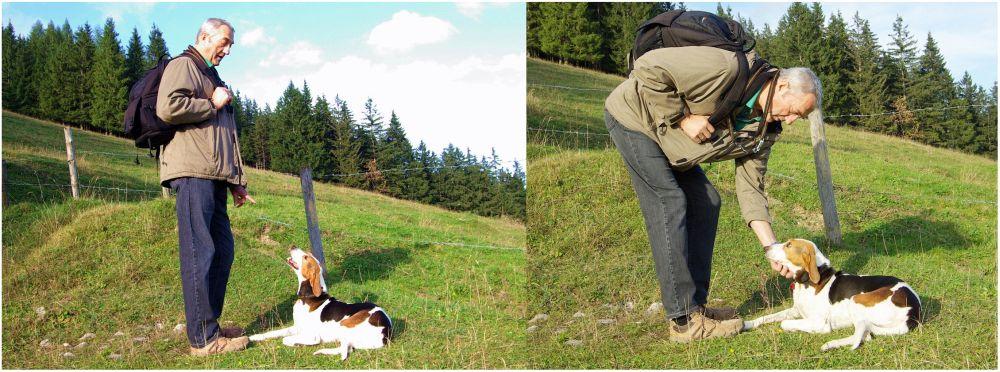 Beagle draußen beschäftigen