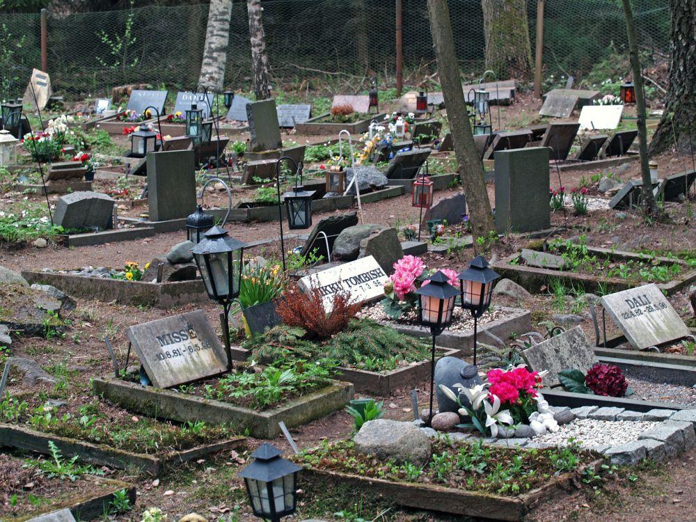 Tierfriedhof Beagle