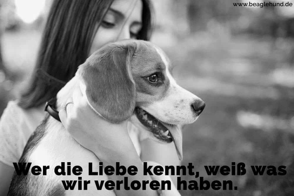 Eine Frau hält ihr Beagle