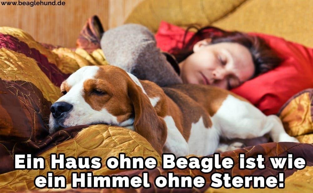 Ein Beagle mit ihren Besitzern am Strand
