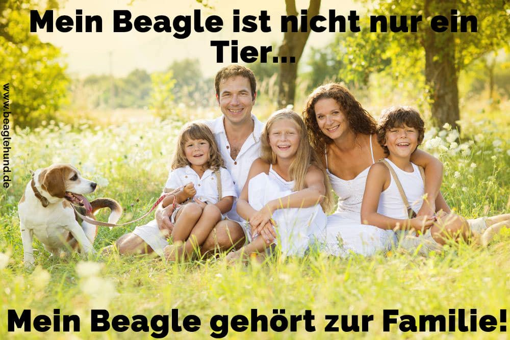 Eine Familie und Ihr Beagle auf Rasen