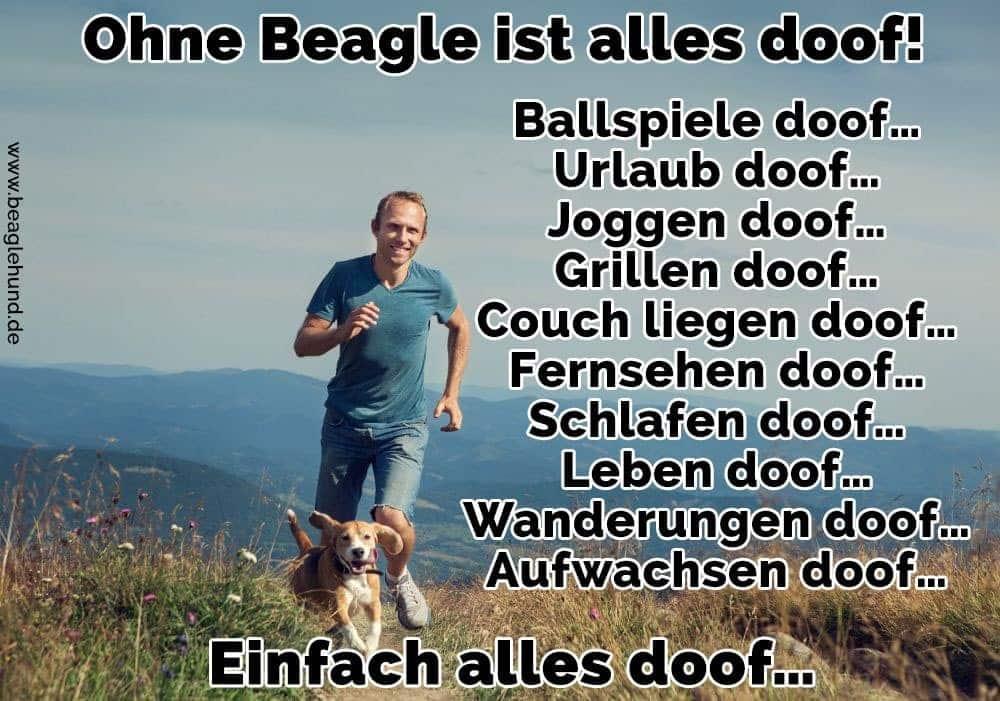 Ein Mann läuft mit seinem Beagle auf Rasen