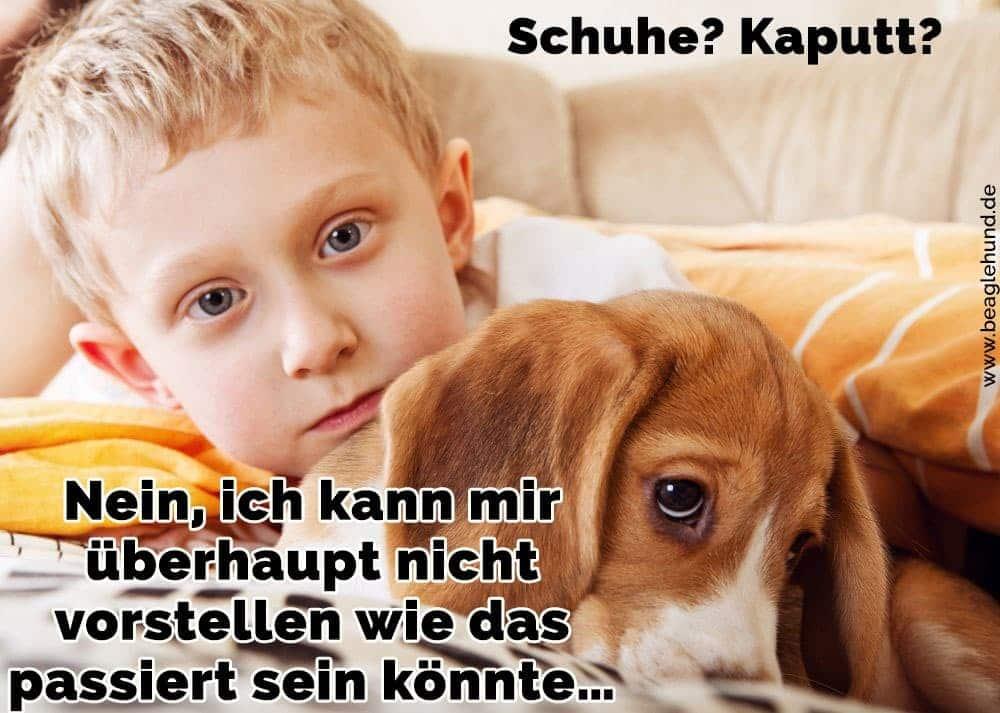 Ein Junge hält seinen Beagle