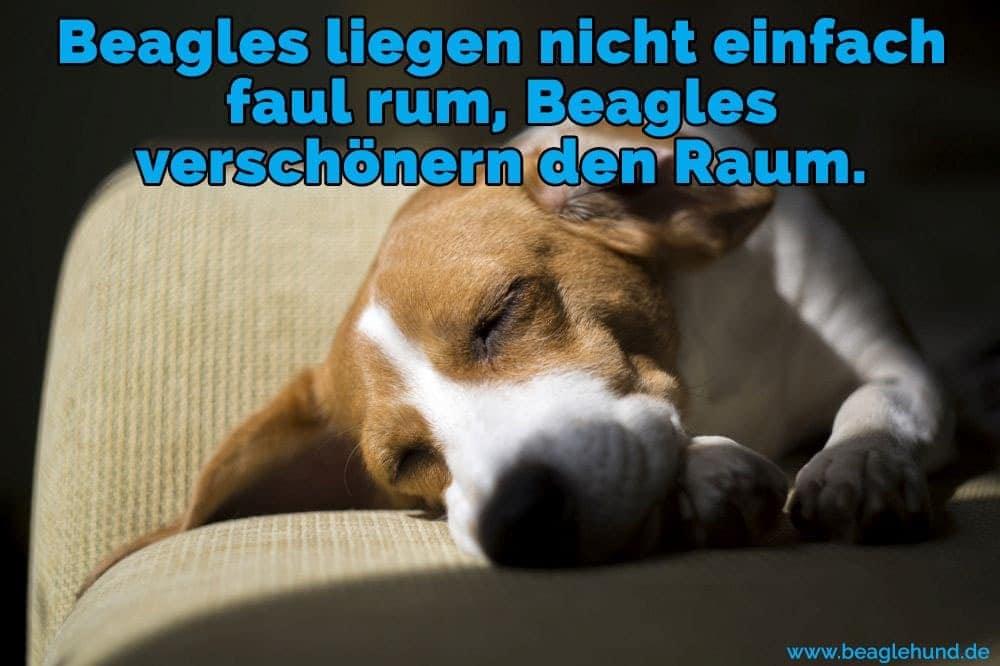 Ein Beagle auf Sofa schläft