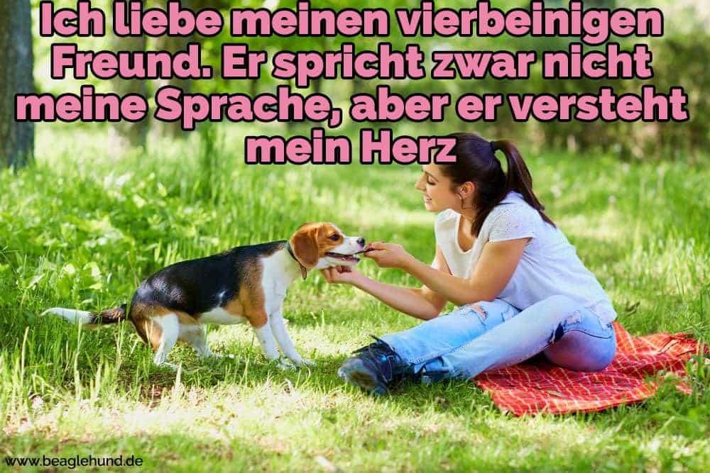 Eine Frau streichelt ihren Beagle